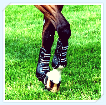 equifit front boots