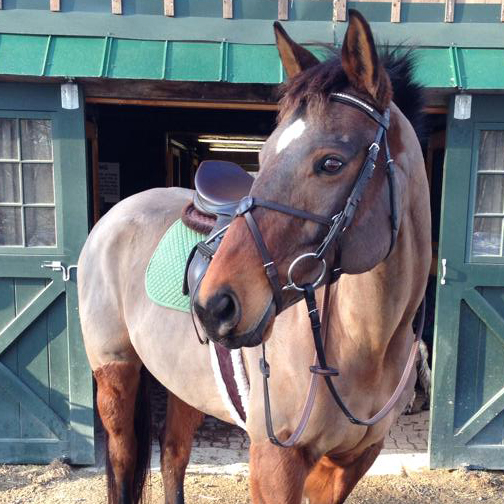 types of horse clips