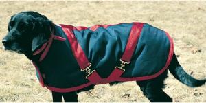 turnout dog blanket
