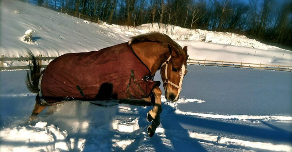 horse blanket care