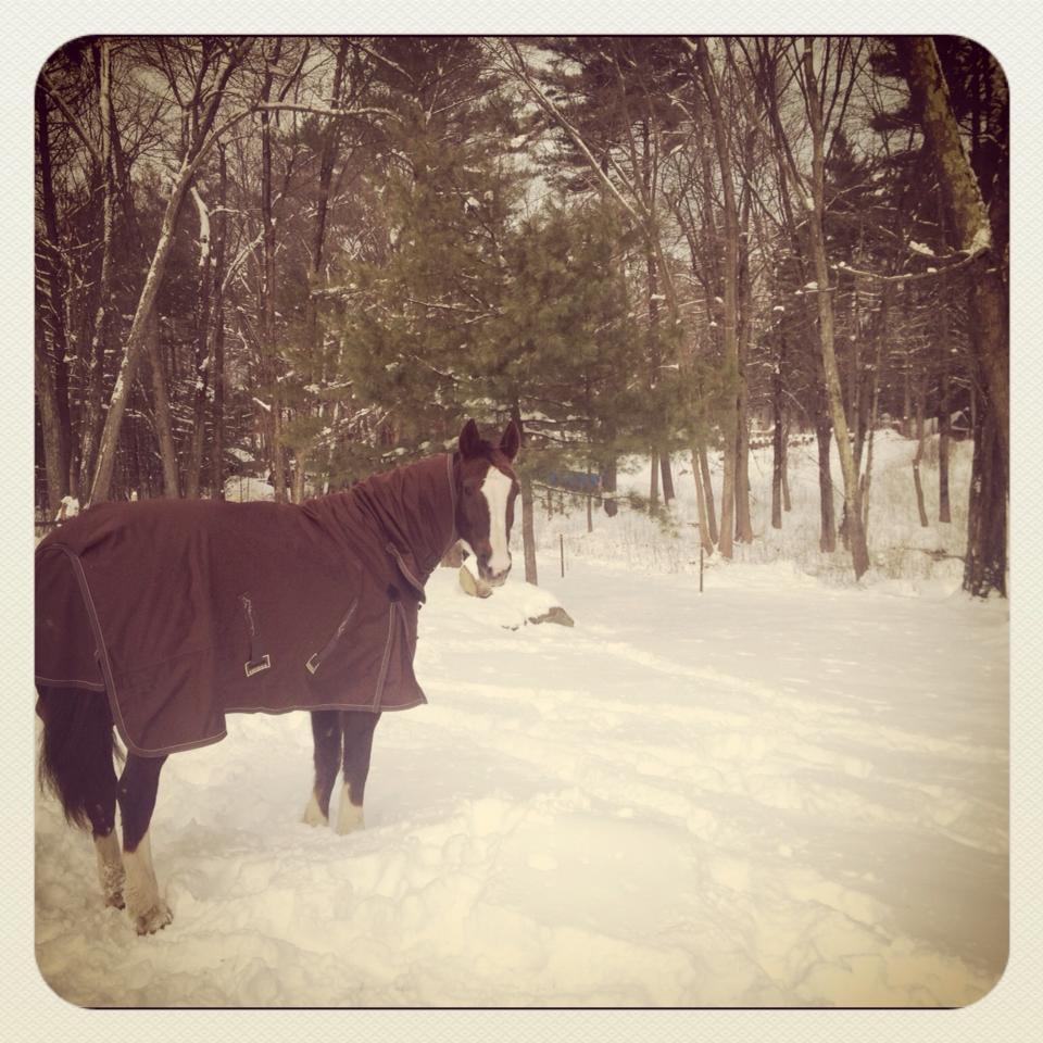 horse blanket sizing