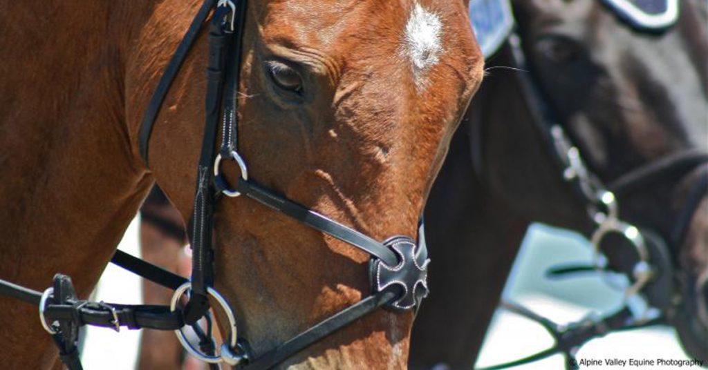 horse bit types