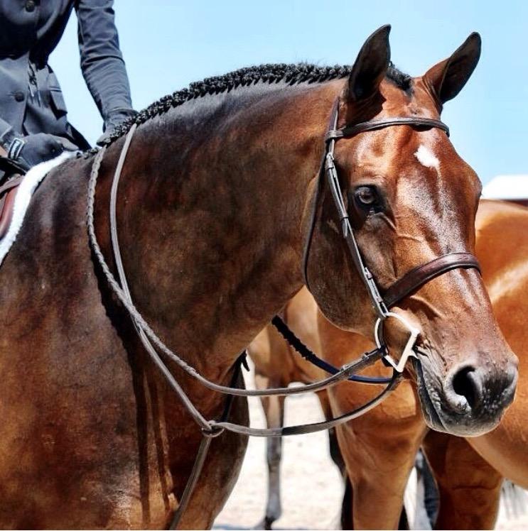 types of english reins