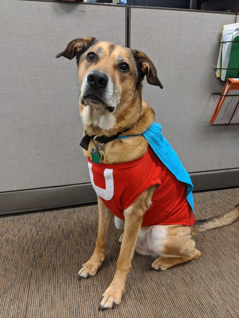 "Dog dressed up in superhero ""Underdog"" Halloween costume."