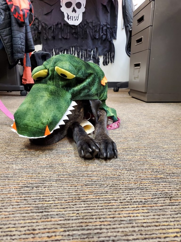 Black dog laying down dressed up in green dinosaur Halloween costume.
