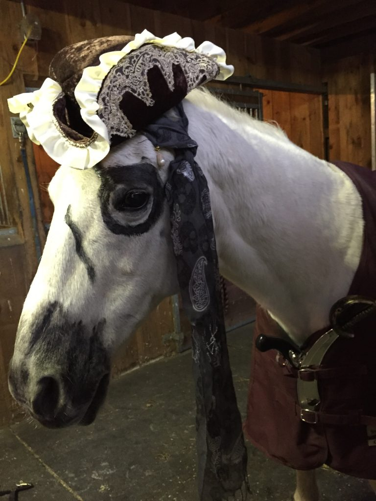 Grey horse dressed up in pirate Halloween costume.