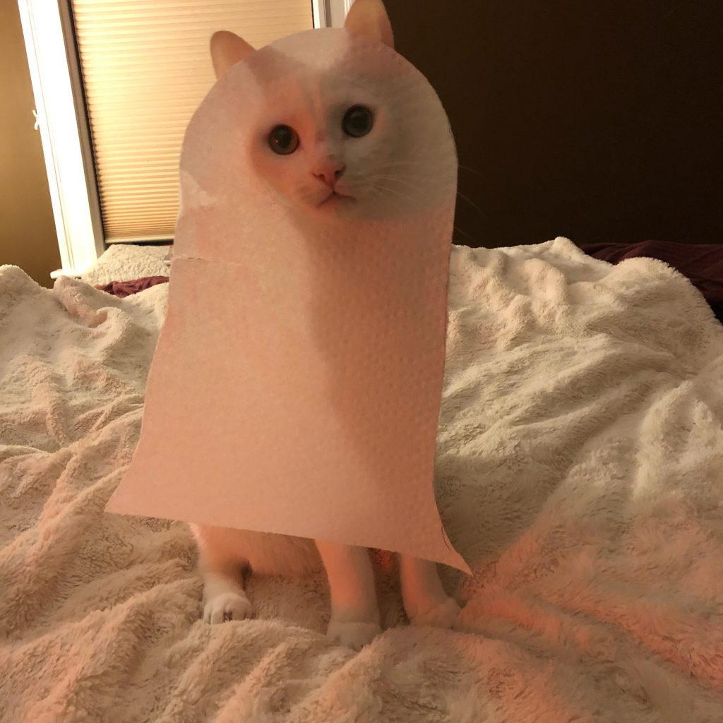 White cat wearing a white ghost Halloween costume.