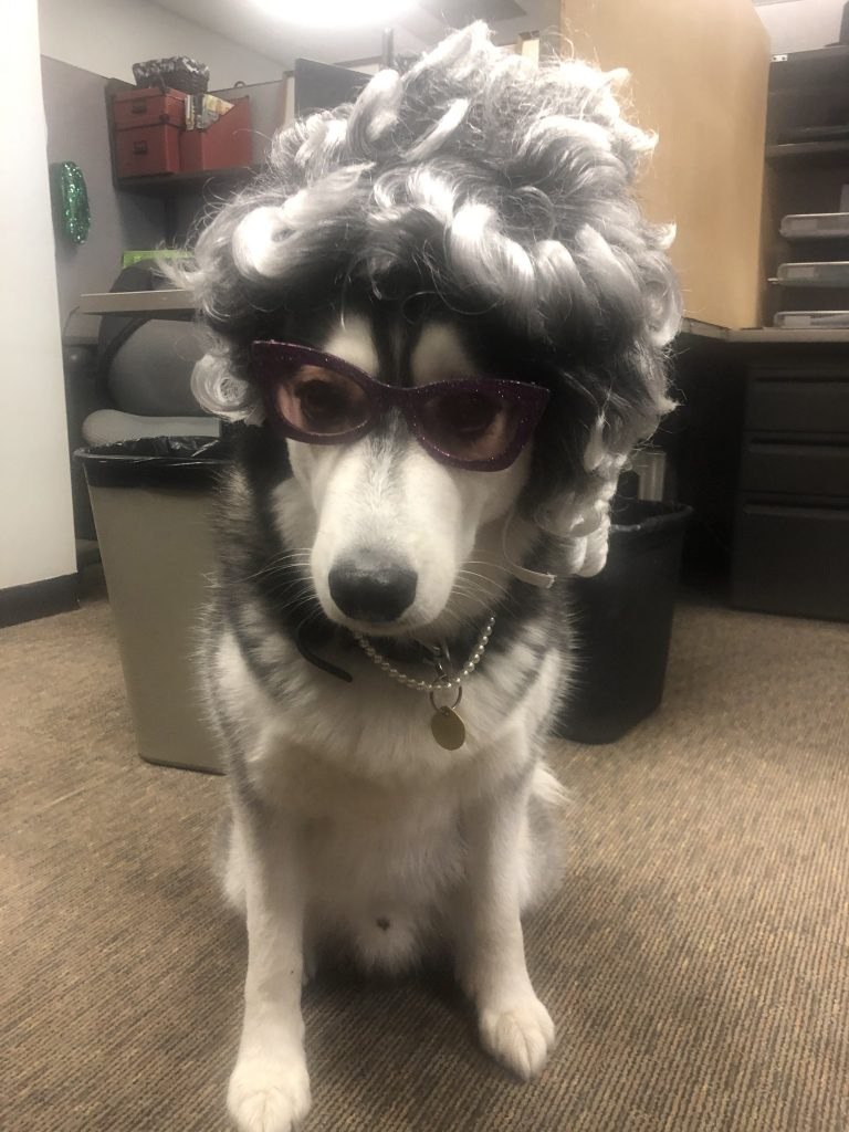 Husky dressed in Big, Bad, Wolf/Granny Halloween costume.