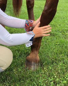 Applying a liniment wash to a horse's front leg.