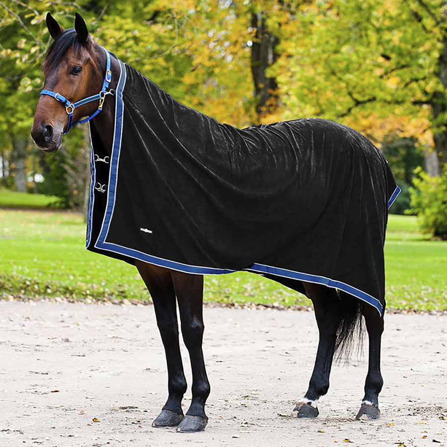 A bay horse is shown wearing a black American style cooler with blue trim.