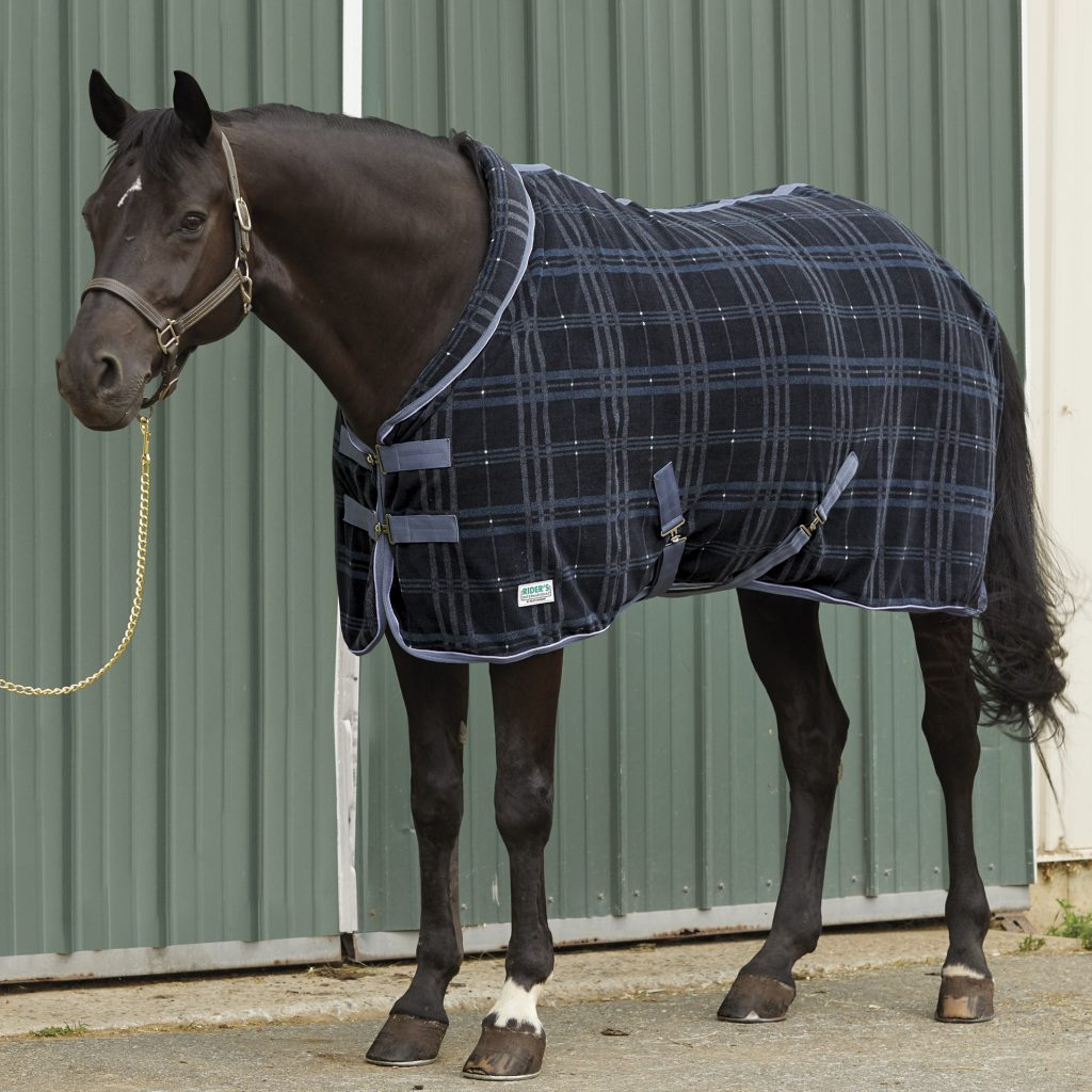 A horse is standing in front of barn doors wearing a black and blue fleece plaid cooler.